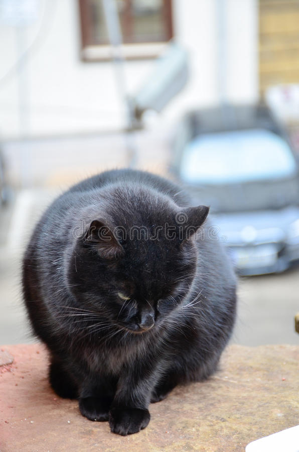 Download Cat stock photo. Image of healthy, interested, furry - 83718384