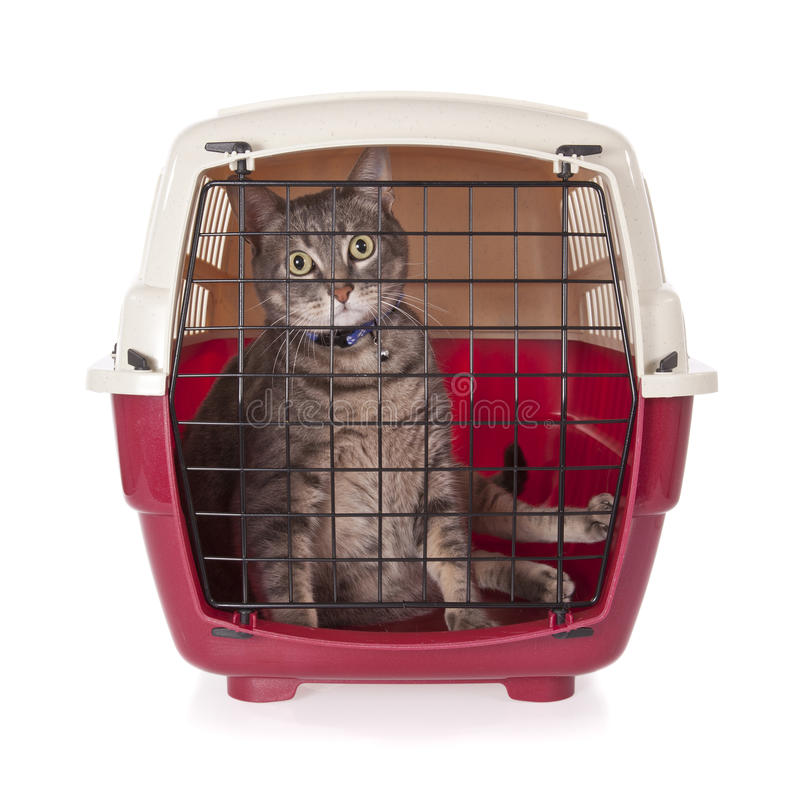 Download Cat Closed Inside Pet Carrier Stock Photo - Image: 14323140