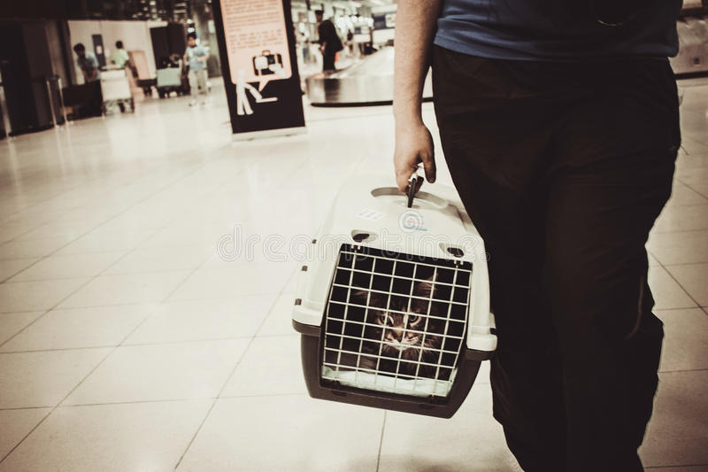 Cat closed inside pet carrier in airport royalty free stock images