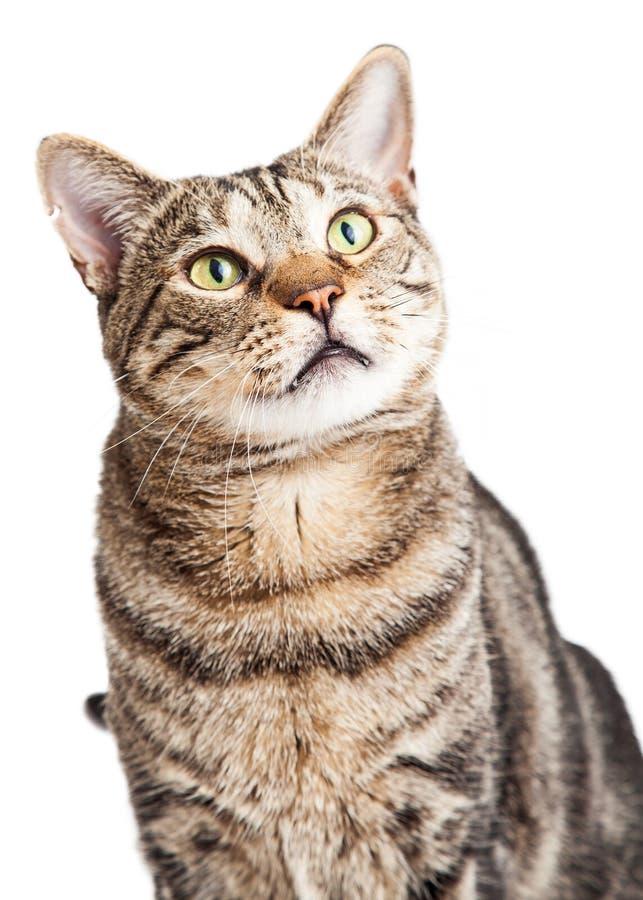 Cat Closeup Looking Up stock afbeelding