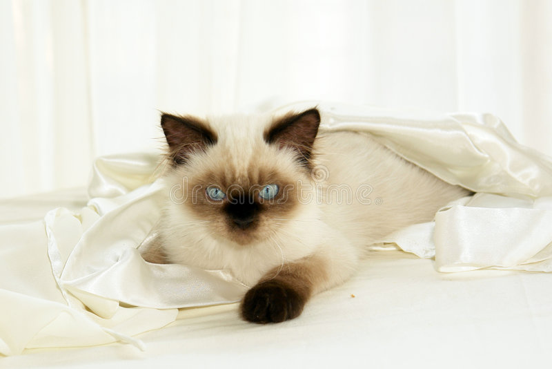 Download Cat In Cloth Royalty Free Stock Photo - Image: 3073805