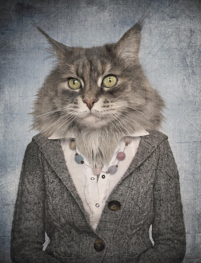 Cat in clothes. Concept graphic in vintage style.  stock photo