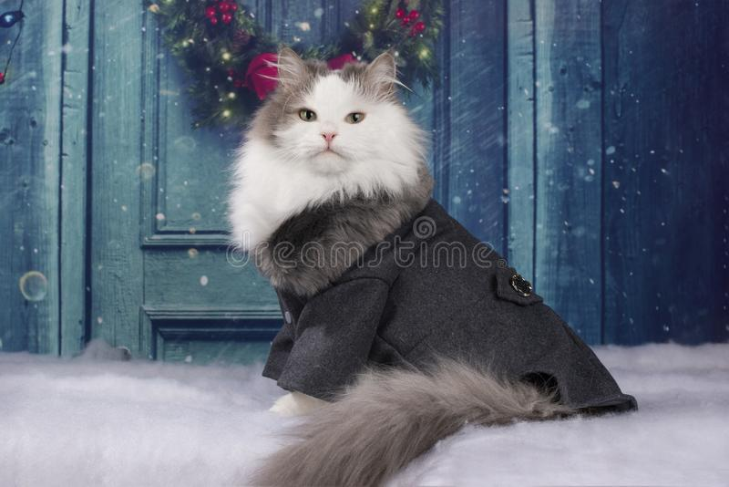 Cat in a coat sits at the door.  stock image