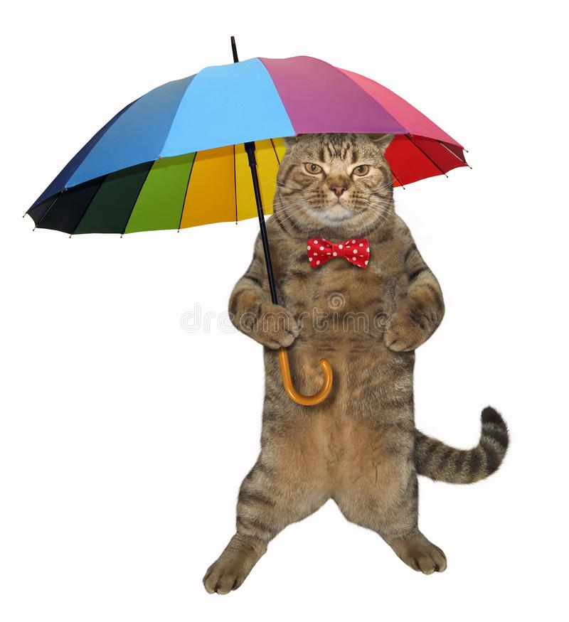 Cat with a color umbrella stock images