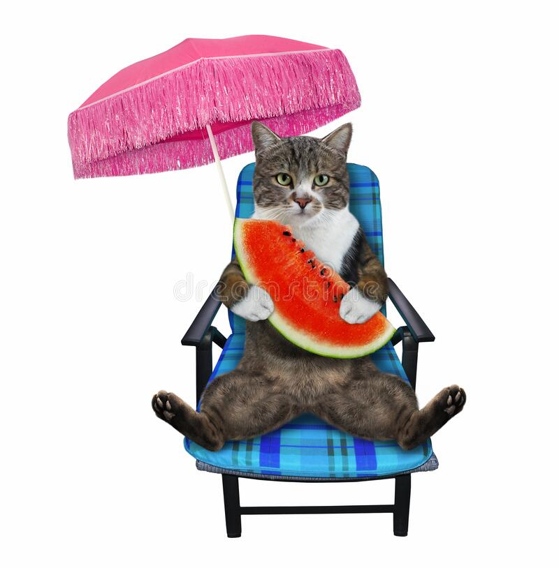 Free Cat Colored Eats Watermelon On Chair Royalty Free Stock Photo - 215577935