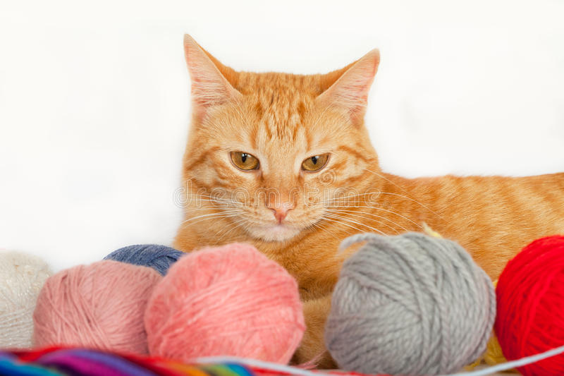 Cat with colorful yarn balls royalty free stock image