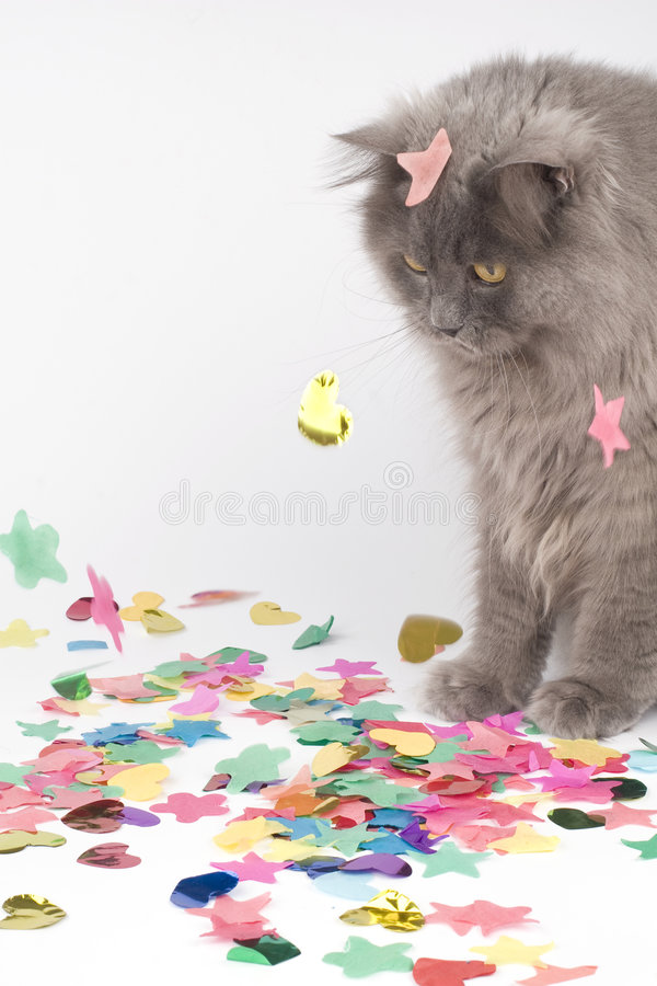 Download Cat With Coloured Decoration For Party Royalty Free Stock Image - Image: 8649866