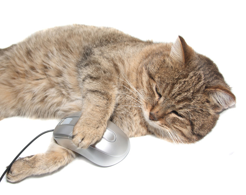 Cat with the computer mouse. On a white background royalty free stock photography
