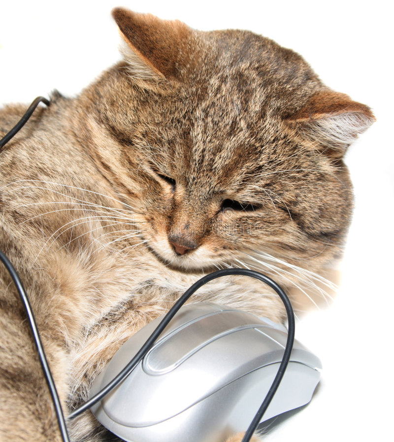 Cat with the computer mouse. On a white background stock image