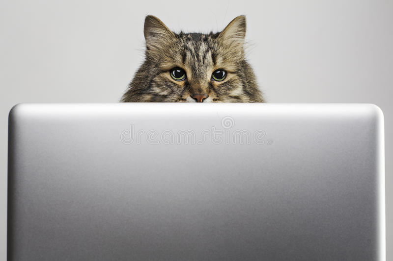 Cat and computer royalty free stock photos
