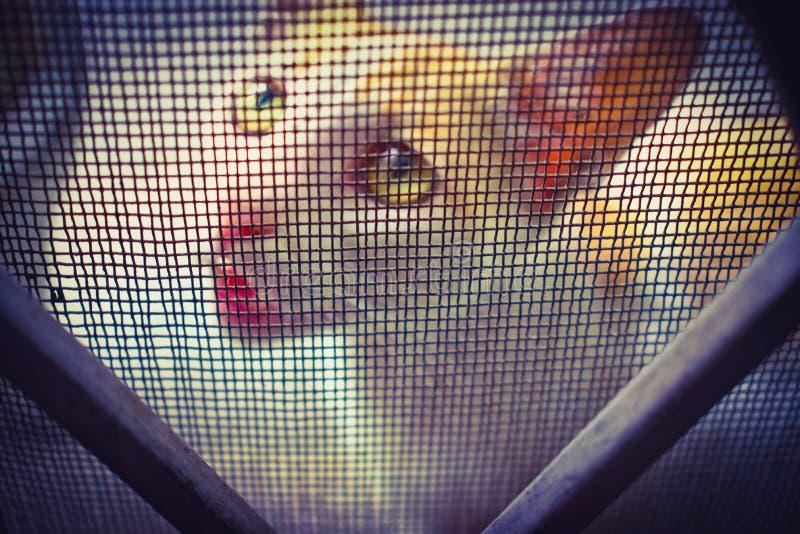 CAT CON L'ESPRESSIONE SVEGLIA che guarda attraverso la rete metallica immagini stock libere da diritti