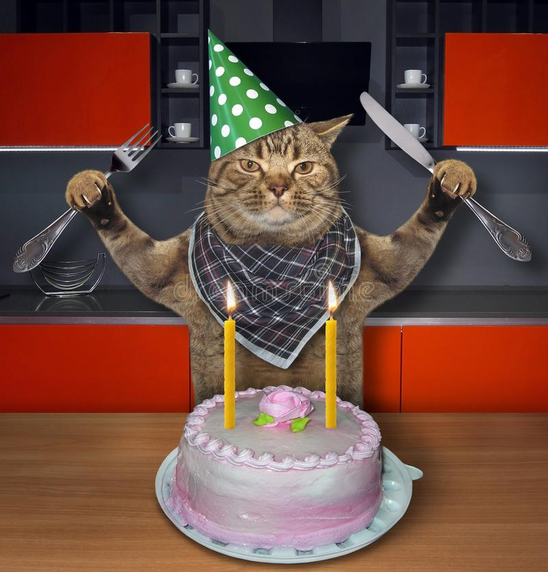 Cat in a birthday hat with the cake 2. The cat in a cone hat with a knife and a fork eats the birthday cake with candles in the kitchen royalty free stock image