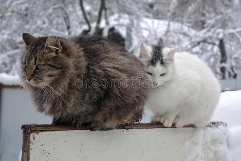 Cat couple sitting on the fence in the winter garden royalty free stock images