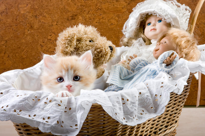 Cat in a cradle. Six weeks old kitten and dolls in a cradle royalty free stock image