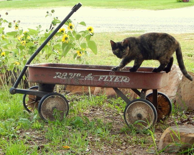 Cat Creeps op Wagen royalty-vrije stock afbeelding