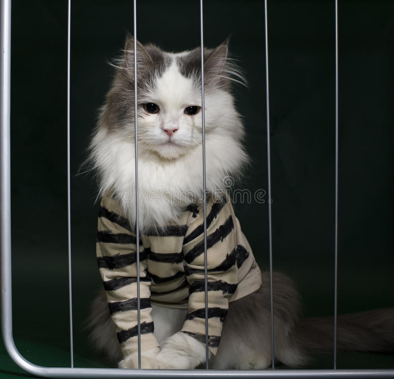 Image result for criminal cat