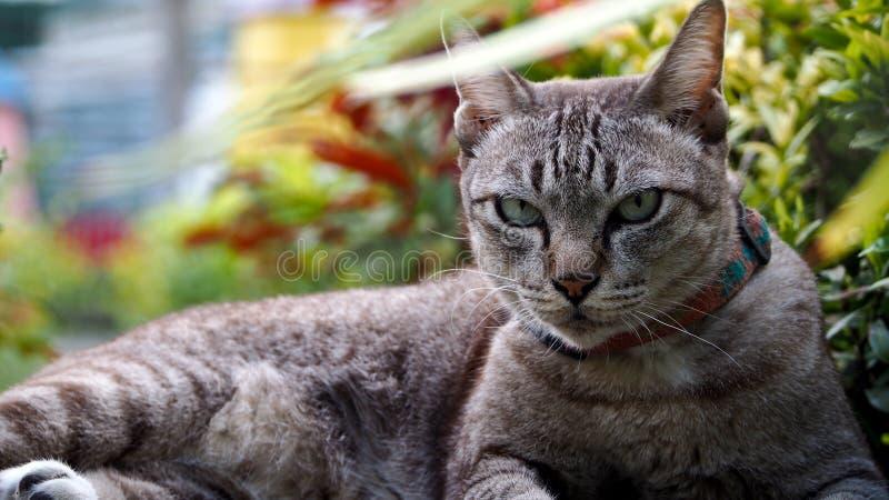 Cat Crouching difícil fotos de archivo