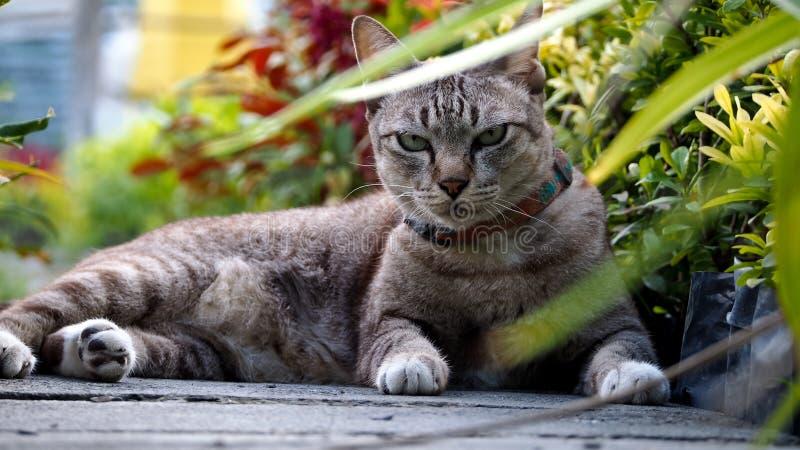 Cat Crouching difícil imágenes de archivo libres de regalías