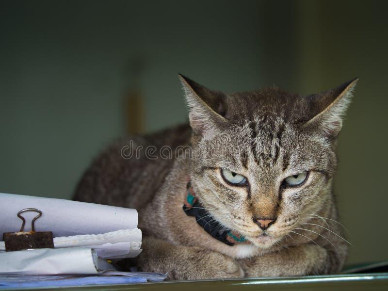 Cat Crouching en el disco de la oficina fotos de archivo libres de regalías