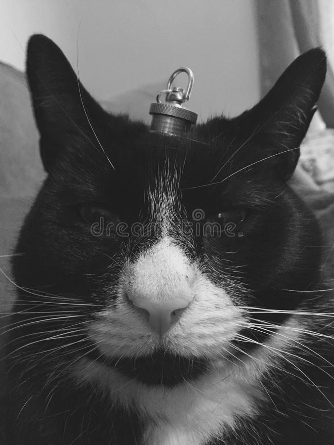 Cat with A crown royalty free stock photos