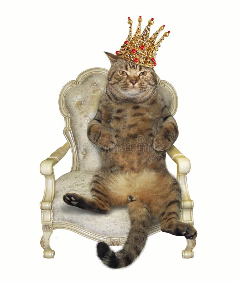 Cat in crown on throne stock image