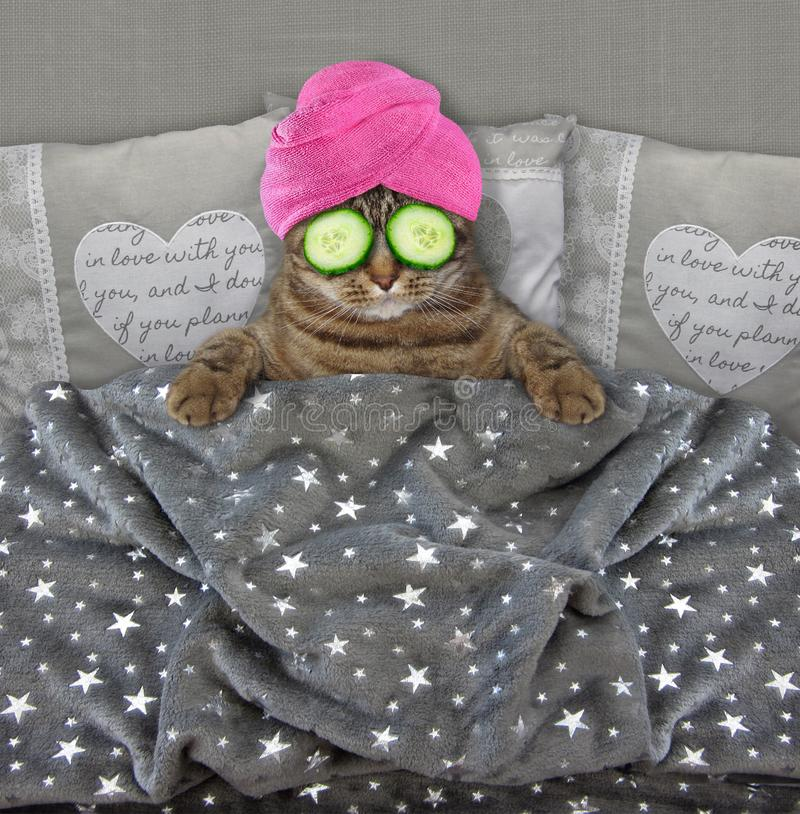 Cat with cucumbers on its eyes. The cat in a pink towel around its head with cucumber slices on its eyes is in bed stock image