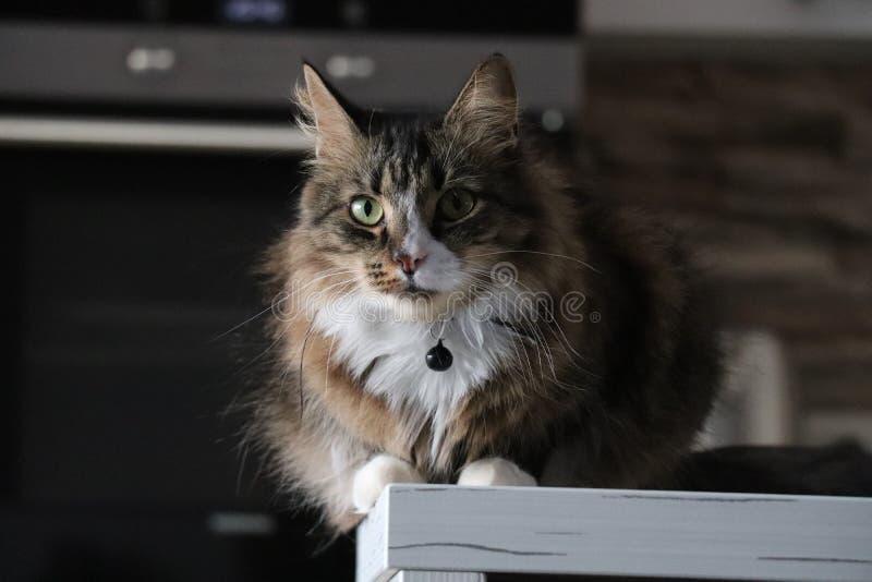 Cat photographie stock