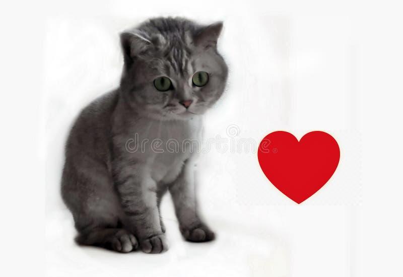 Cat Cut British Kitty With röd hjärta, djurskydd, älskvärt kattungekort royaltyfria bilder