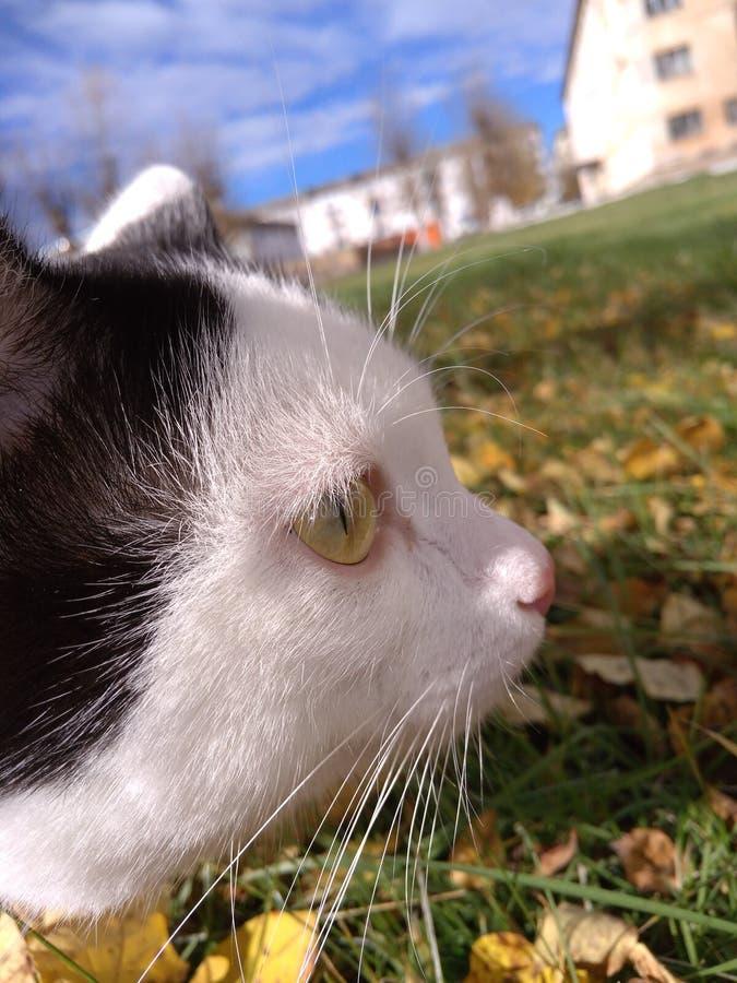 cat cute στοκ εικόνες με δικαίωμα ελεύθερης χρήσης