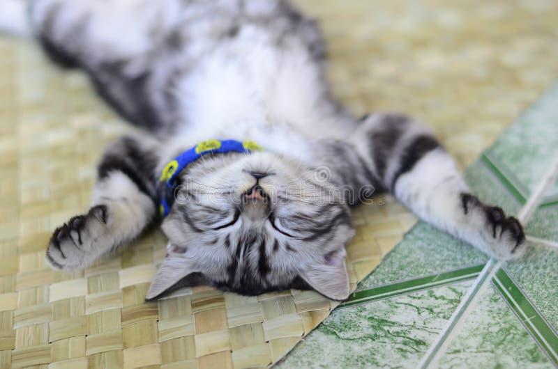 cat cute στοκ φωτογραφίες με δικαίωμα ελεύθερης χρήσης