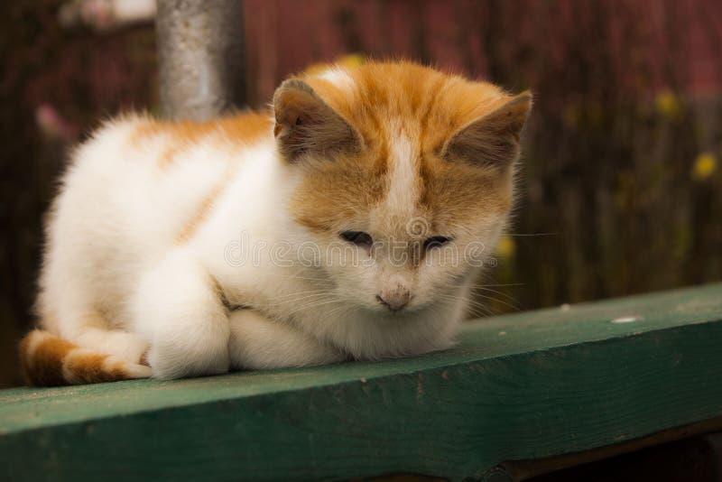 cat cute στοκ εικόνες
