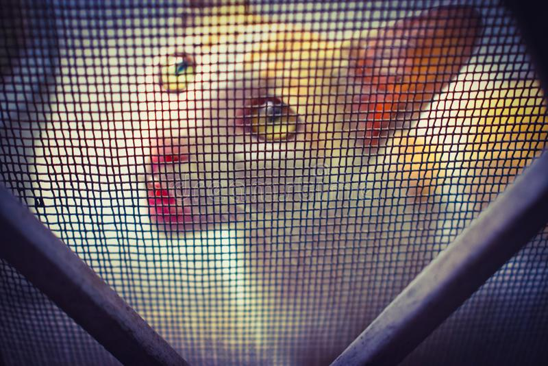 CAT WITH CUTE EXPRESSION looking through wire mesh royalty free stock images