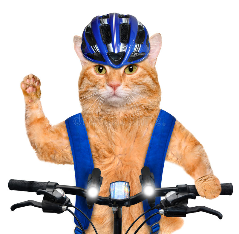 Cat cyclist. royalty free stock image