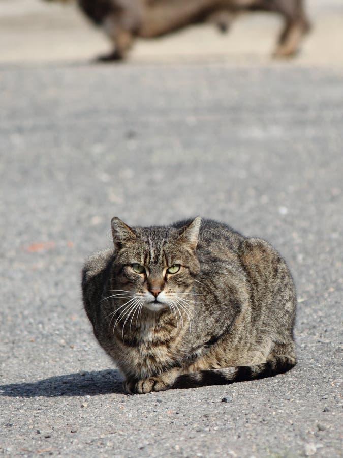 Cat in danger stock photography