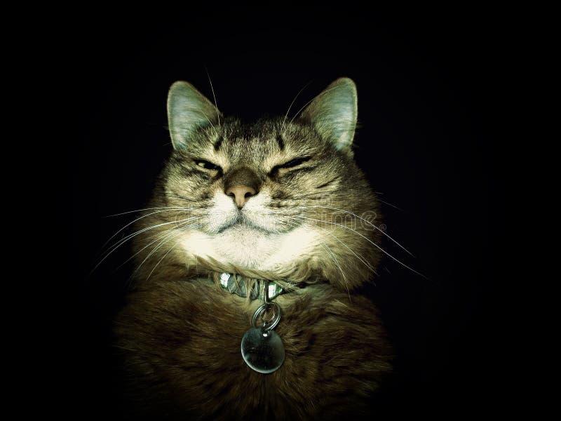 Cat in the dark stock photos