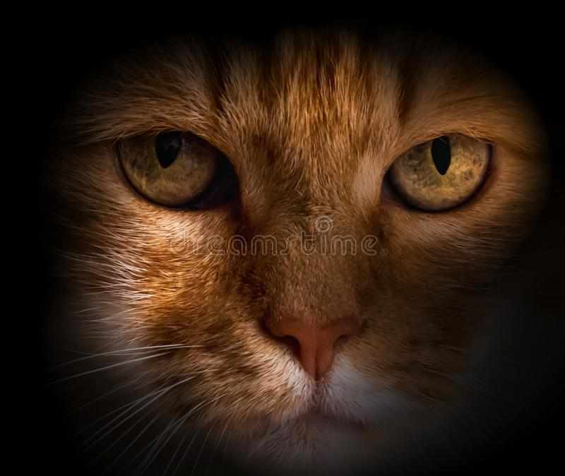 Cat portrait in the darkness stock photos