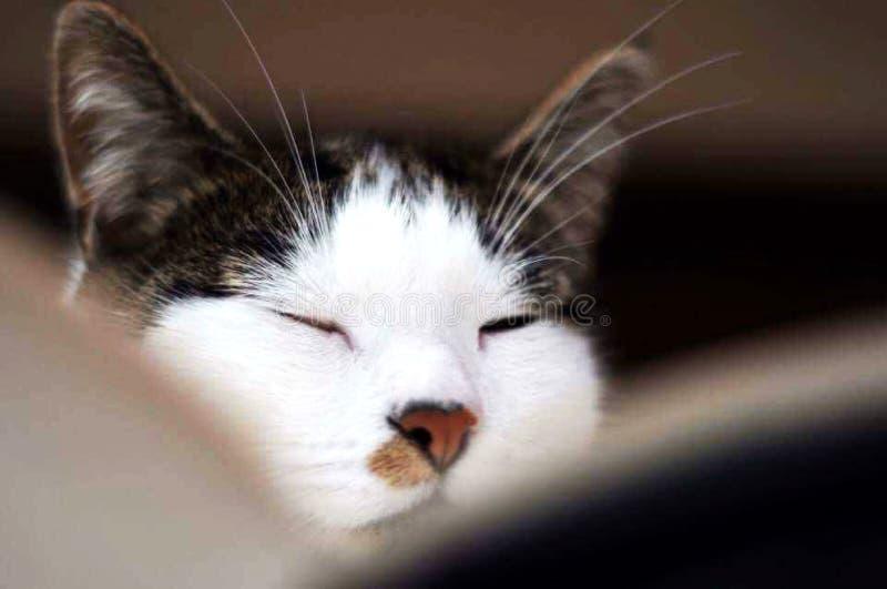 Cat Deep dans la pensée images stock