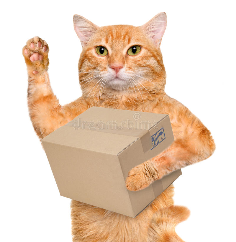 Image result for cat delivery
