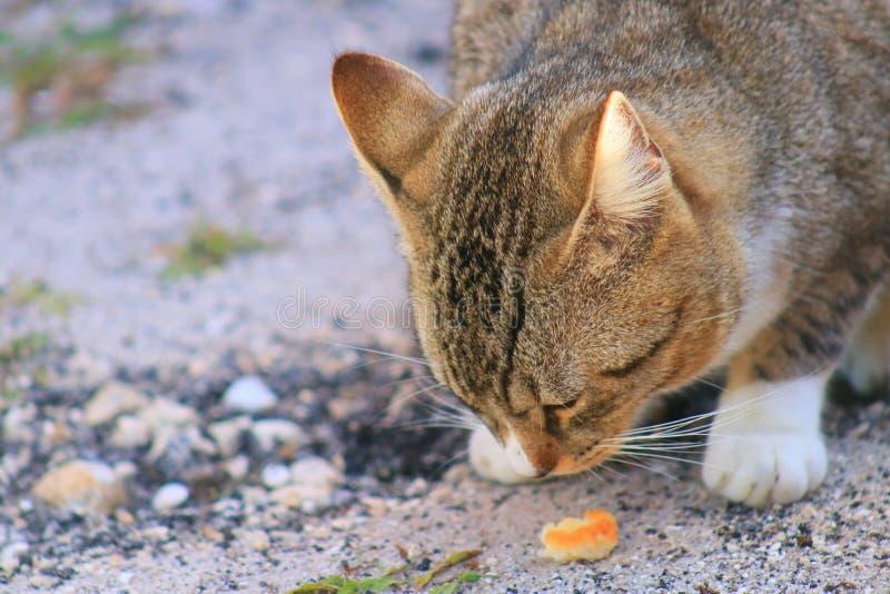 Cat. In Delray beach, Florida, Palm beach stock image