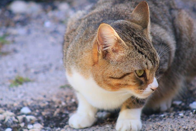 Cat. In Delray beach, Florida, Palm beach stock photo