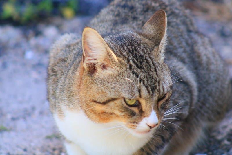 Cat. In Delray beach, Florida, Palm beach royalty free stock photo