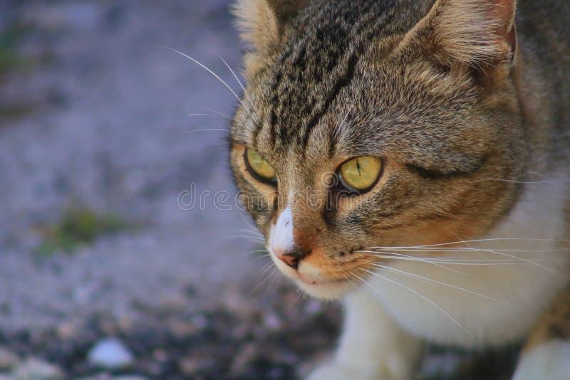 Cat. In Delray beach, Florida, Palm beach royalty free stock photos