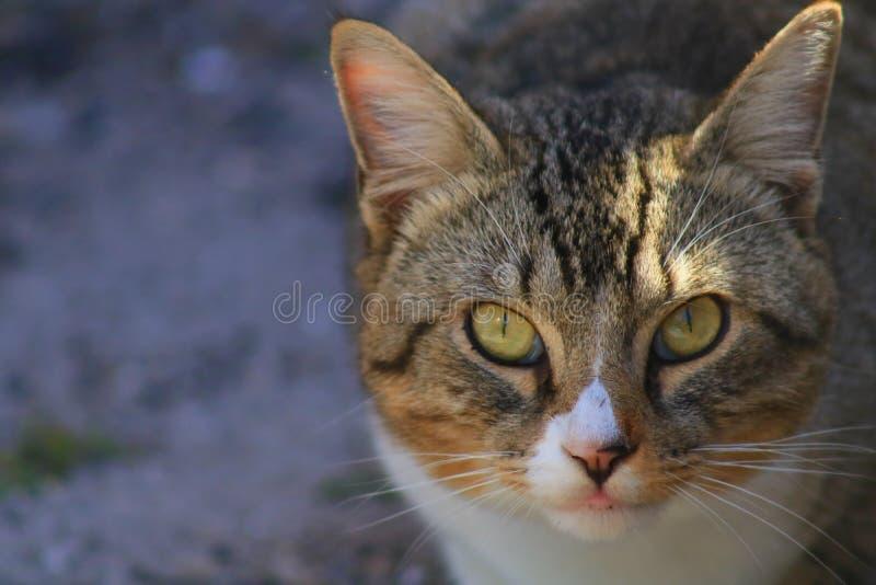 Cat. In Delray beach, Florida, Palm beach stock photos