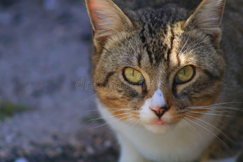 Cat. In Delray beach, Florida, Palm beach stock photography