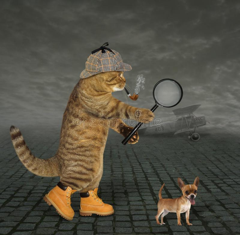 Cat detective at airfield stock photography
