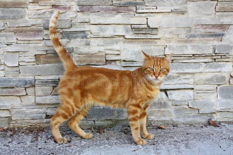 CAT DI LESVOS, GRECIA fotografia stock libera da diritti