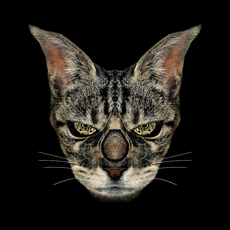 Cat Digital Manipulation Photo Technique enojada imagenes de archivo