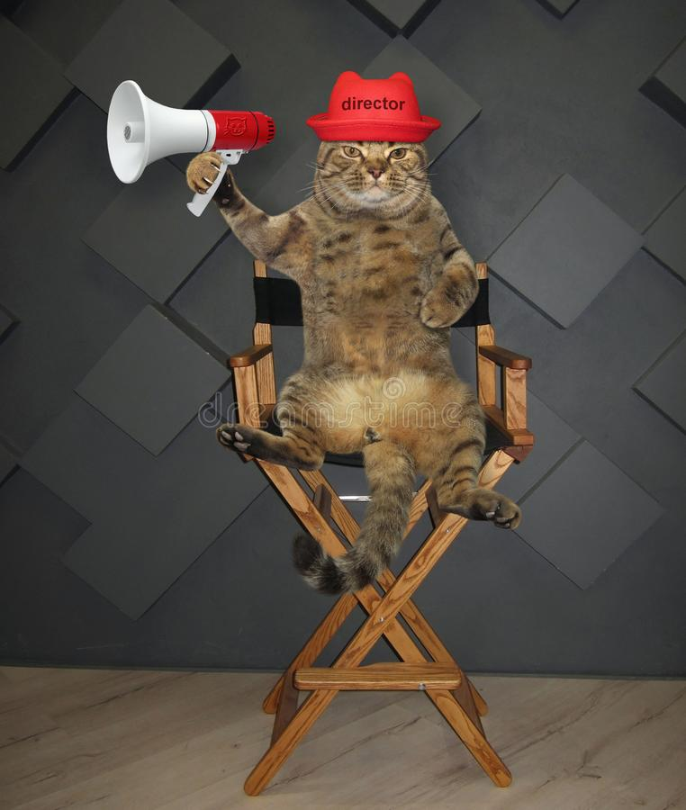 Cat director on chair. The cat director with a megaphone sits on the chair stock images