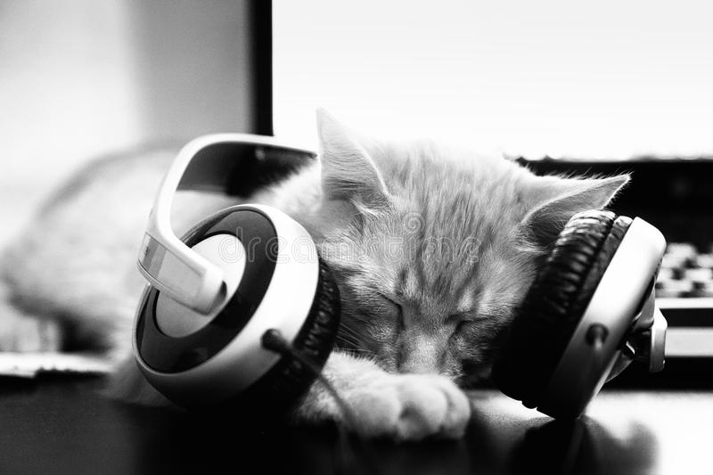 CAT DO DJ fotografia de stock