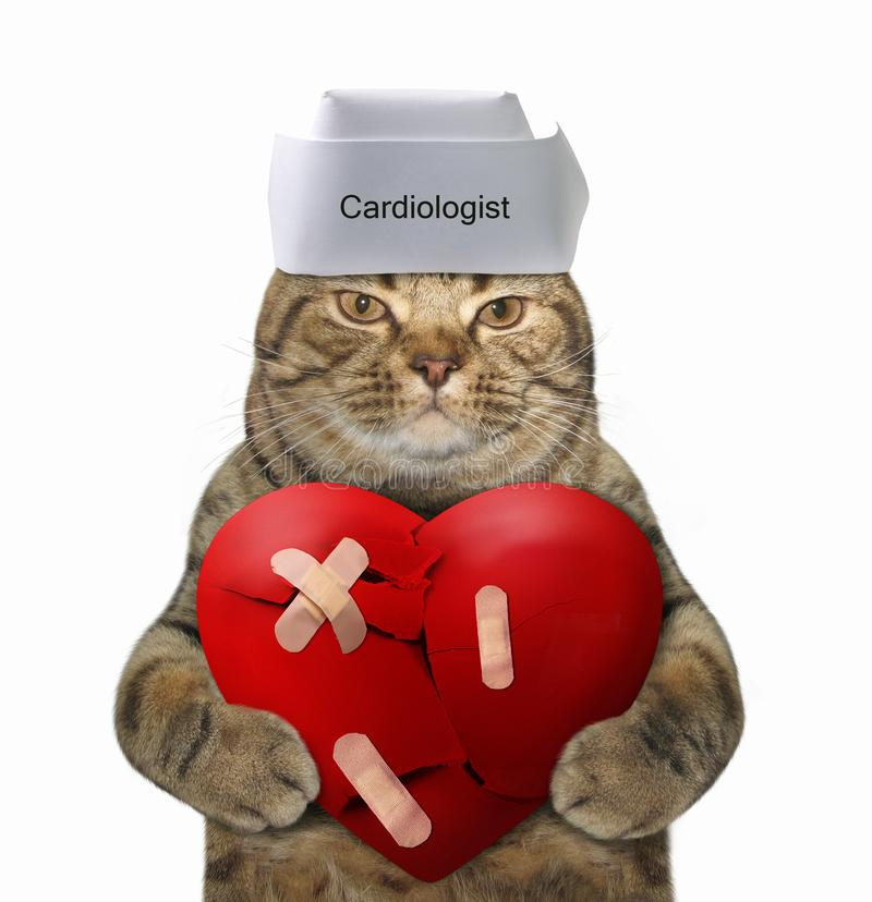 Cat doctor holds a big broken heart. The cat doctor in a white cap is holding a big red broken heart. It glued by plaster. White background stock photography